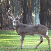 Hunting Lease Available Muskingum County Ohio