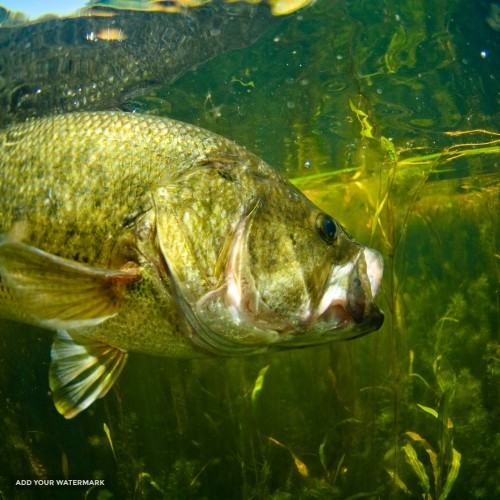 Fishing lease for 2016 wanted near Dallas-Fort Worth