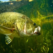 Fishing lease for 2014 wanted near Dallas-Fort Worth